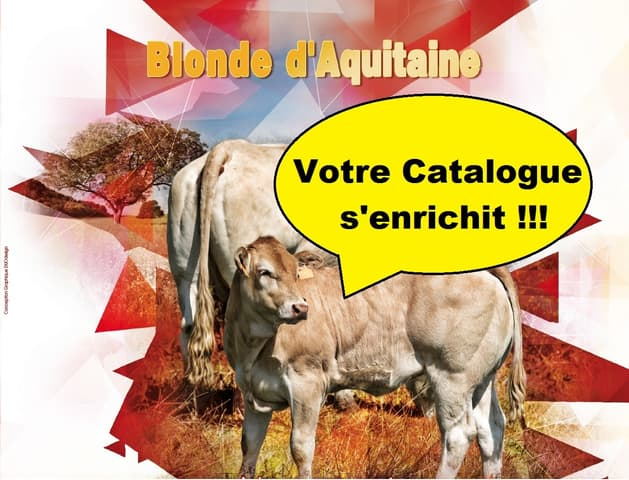 Catalogue Blonde d'aquitaine : votre catalogue s'enrichit !